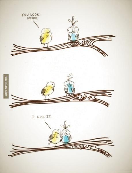 weird-birds