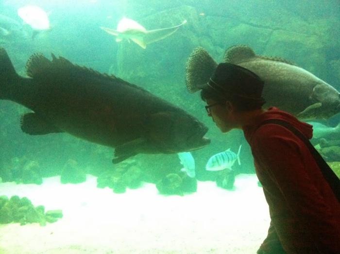A field trip to the aquarium