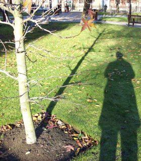 fv-fred-shadow